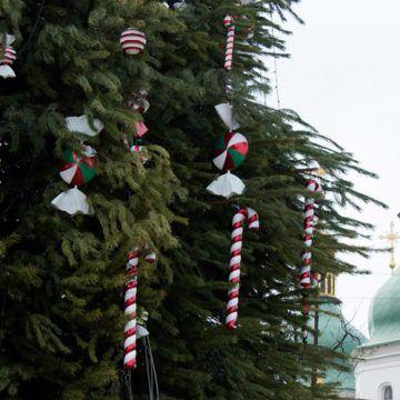 Київську новорічну ялинку зібрали з вінницького гілля