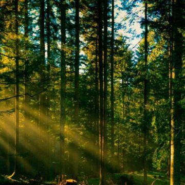 Цього року вінницькі лісівники відновлять 902 гектари лісу