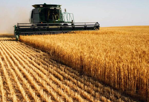 Вінницька область і досі експортує агропродукцію в Росію