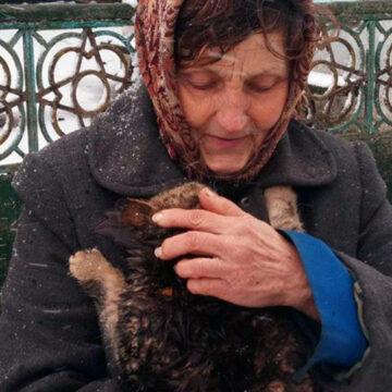 У Сутисках рятувальники зняли з дерева кота, який просидів там дві доби