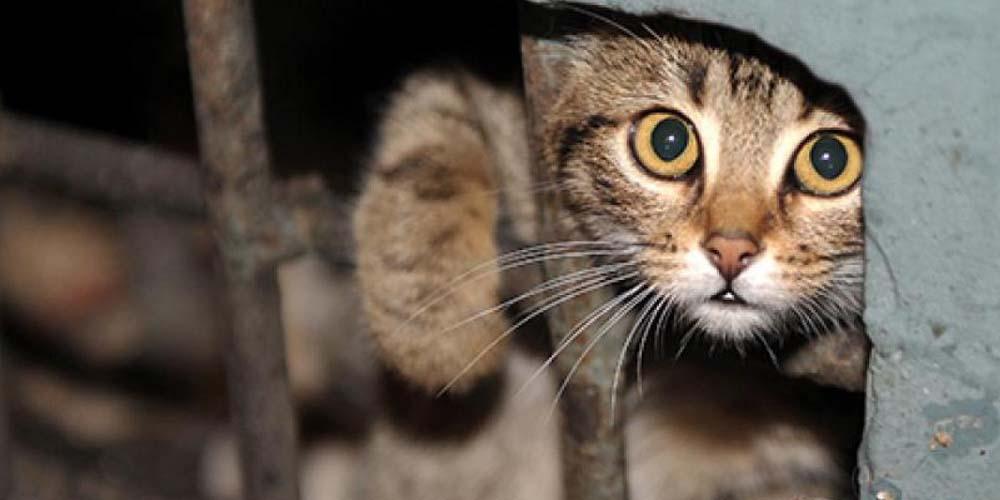 У Барській громаді вимагають визнати безпритульних котів частиною екосистеми міста