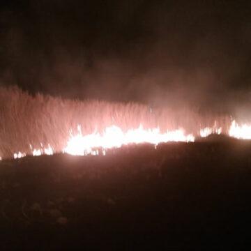 На Вінниччині за добу ліквідовано 13 пожеж сухої рослинності на площі 14 га