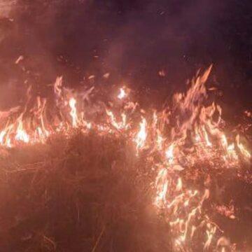 На Вінниччині за добу рятувальники ліквідували тринадцять пожеж сухостоїв