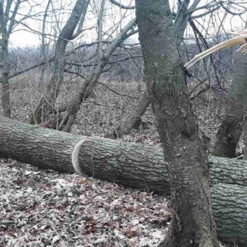На Вінниччині з порушника, що незаконно рубав дерева стягнули 10 тисяч гривень