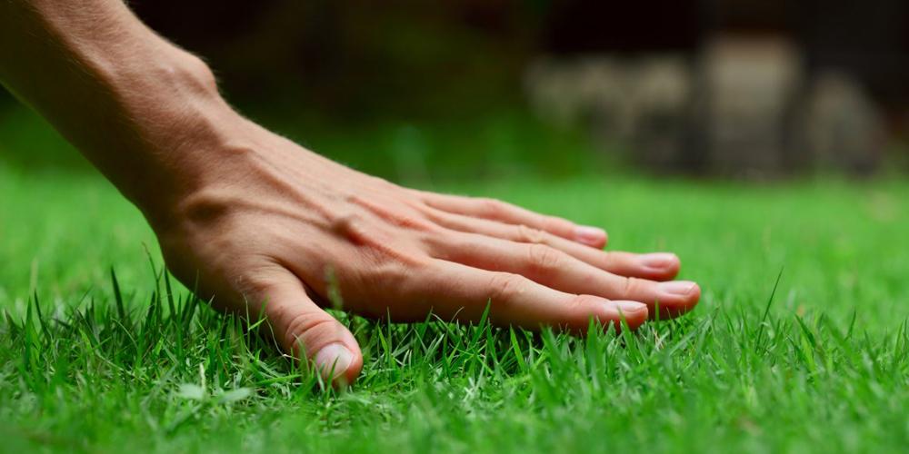 Вінницязеленбуд запитує у вінничан як далі озеленяти місто