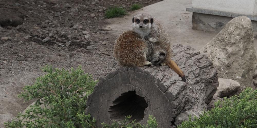Подільський зоопарк знову чекає на відвідувачів