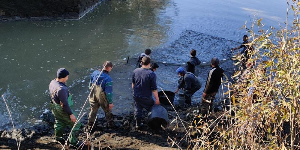 Ладижинське водосховище «поповнили» майже 5 тоннами риби