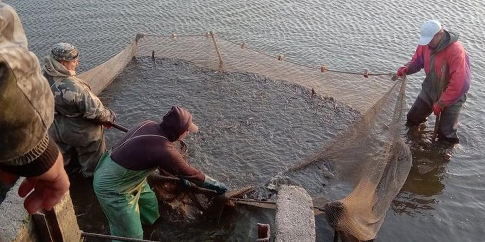 Товстолоб, білий амур та короп: в водосховище в Шаргородському районі випустили більше тонни риби