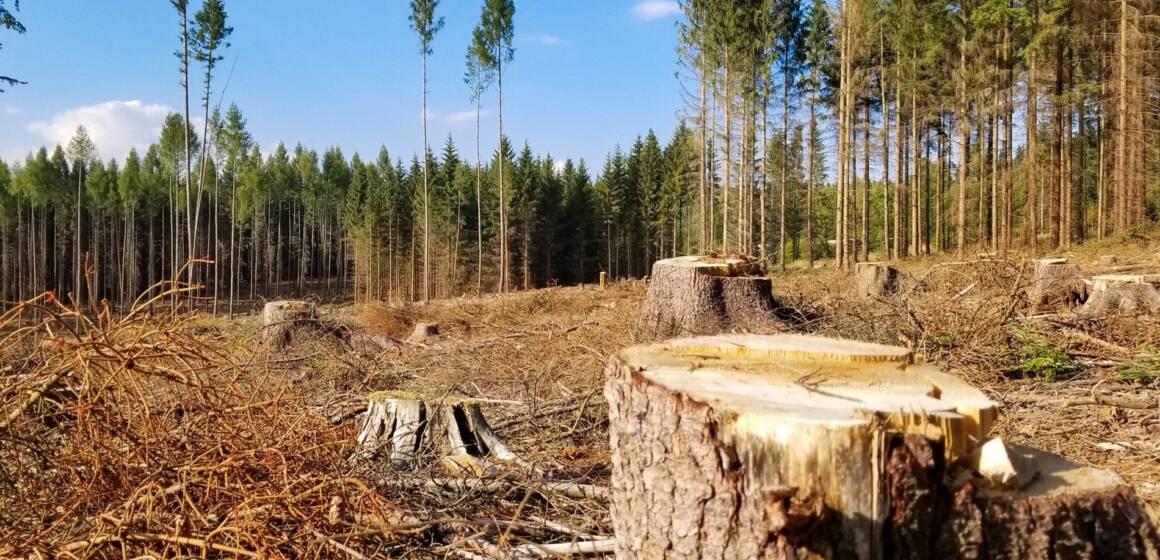 На Вінниччині незаконно вирубували дерева. Сума збитку – 3 мільйони гривень