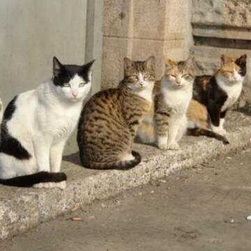 У Вінниці стерилізуватимуть безпритульних котів та кішок