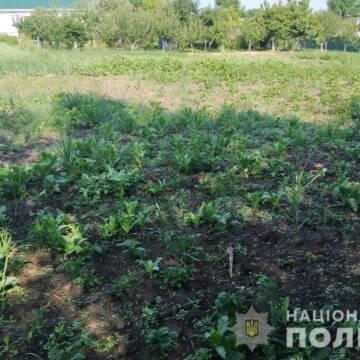 Мешканка Вінницької області вирощувала мак на присадибній ділянці