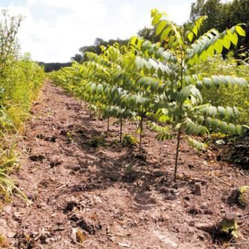 У Вінницькій області висадили тисячу гектарів нових лісів