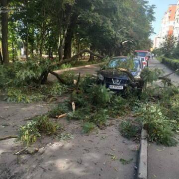 В одному з мікрорайонів міста дерево впало на автомобіль